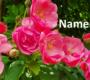 Namen für Romanfiguren entwickeln